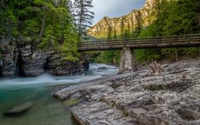 Картинка деревья, горы, мост, река, ручей, Монтана, Glacier National Park, Скалистые горы, Montana, Национальный парк Глейшер, …
