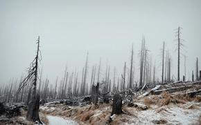 Обои зима, лес, пейзаж, туман