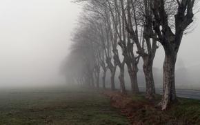 Обои утро, туман, дорога, деревья