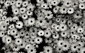 Обои цветки, макро фотографии, цветы, цветок, природа