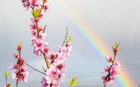 Картинка небо, цветы, радуга, ветка, весна, сад