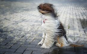 Картинка ветер, улица, собака