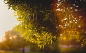 Картинка листья, ветки, боке