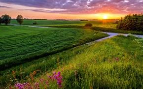 Картинка поле, небо, трава, солнце, закат, тучи, вечер, луг, grass, sky, field, sunset, clouds, evening, sun, …