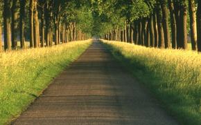 Обои дороги, путь, пейзажи, природа, дорога, дерево даль, пути, аллея, аллеи