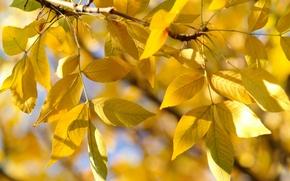Обои ветка, осень, листья