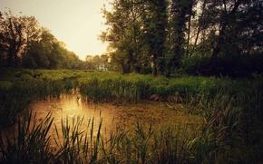 Картинка природа, пруд, вечер