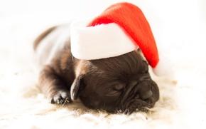 Картинка белый, красный, фон, новый год, рождество, собака, маленький, мордочка, спит, щенок, лежит, мех, санта клаус, ...