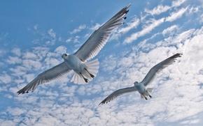 Картинка небо, облака, полет, птица, крылья, чайка