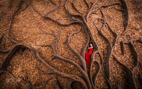 Картинка осень, девушка, корни, дерево, листва, в красном