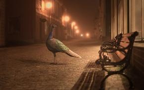 Картинка огни, улица, павлин