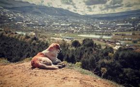Картинка пейзаж, вид, собака