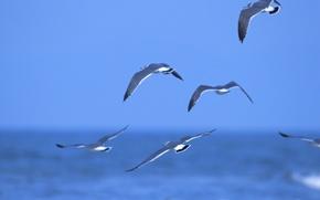 Картинка море, вода, птицы