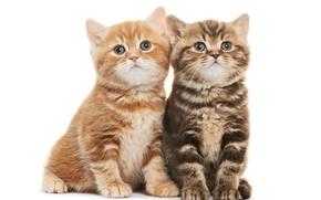Картинка малыши, дуэт, котята