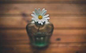 Картинка цветок, ромашка, ваза