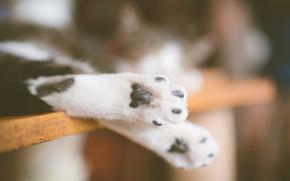 Картинка кошка, кошачьи, лапки, лапы