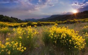 Картинка трава, солнце, облака, деревья, пейзаж, закат, цветы, горы, природа, поляна, желтые