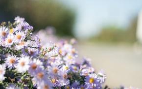 Картинка цветы, букет, размытость, маргаритки