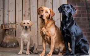 Картинка собаки, трио, друзья