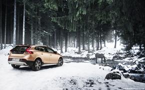 Картинка лес, снег, ручей, лошадь, Volvo, Volvo V40 Cross County