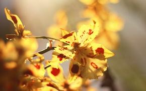 Картинка макро, Цветы, орхидея