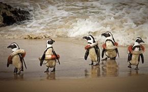 Обои юмор, пингвины, спасательные круги, прибой