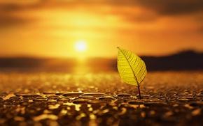 Картинка осень, вода, солнце, природа, лист