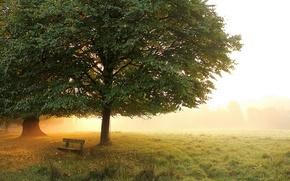 Картинка осень, деревья, скамейка, туман, парк, утро, луг, ранняя