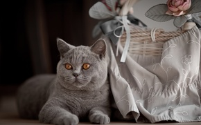 Картинка цветок, кот, животное, корзина, ткань, британец