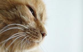 Обои прищур, профиль, кот