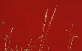 Обои трава, фон, цвет