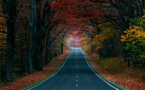 Картинка дорога, осень, лес, деревья, природа, краски