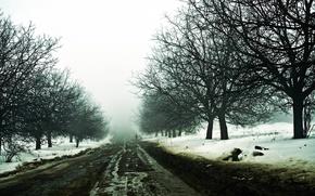 Картинка зима, дорога, снег, мгла, путник