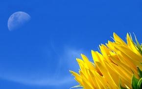 Обои цветок, небо, жёлтый