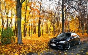 Картинка листья, Осень, BMW, БМВ, черная, Autumn, F10, 550X