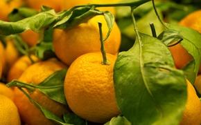 Обои фрукты, мандарины, лакомство