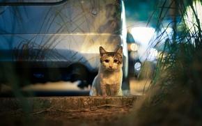 Картинка машина, кошка, город, огни, блики, вечер