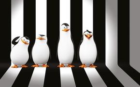 Обои мультфильм, фон, Penguins of Madagascar, DreamWorks Animation, Пингвины Мадагаскара