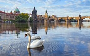 Обои река, башня, дома, Прага, Чехия, лебеди, Влтава, Карлов мост