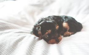 Картинка собака, щенок, животный