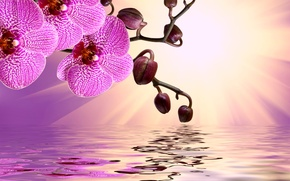 Картинка цветы, flowers, orchid, sunshine, pink, reflection, water, орхидея, beautiful