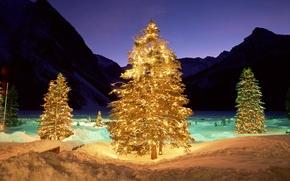 Картинка зима, свет, ночь, елка, подсветка