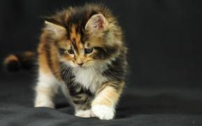Обои интерес, ткань, котёнок