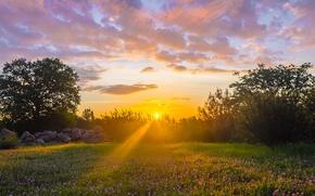 Картинка поле, солнце, лучи, деревья, цветы