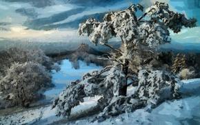 Обои деревья, лес, снег, пейзаж, зима