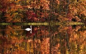Картинка осень, лес, вода, деревья, пейзаж, природа, озеро