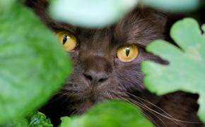 Картинка глаза, кот, взгляд, листья, мордочка, маскировка