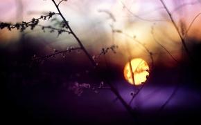 Картинка трава, солнце, макро, закат, веточка, Вечер, размытость, блик