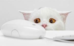 Обои испуг, мышка, желтые глаза, белый кот