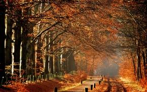 Картинка деревья, туман, утро, Осень, дорожка, тропинка, autumn